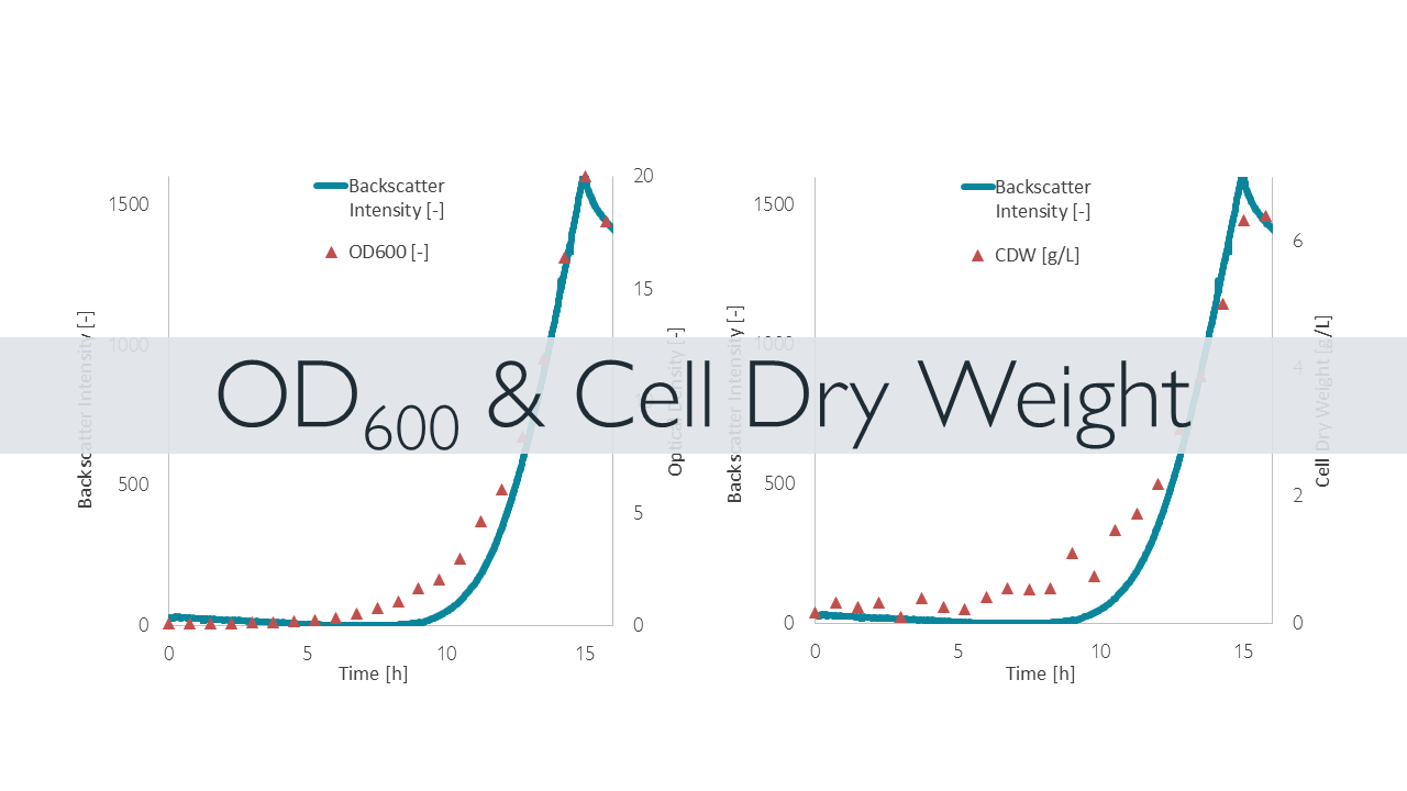 Example demonstrating correlation between backscatter intensity and OD600 or Cell Dry Weight, respectively